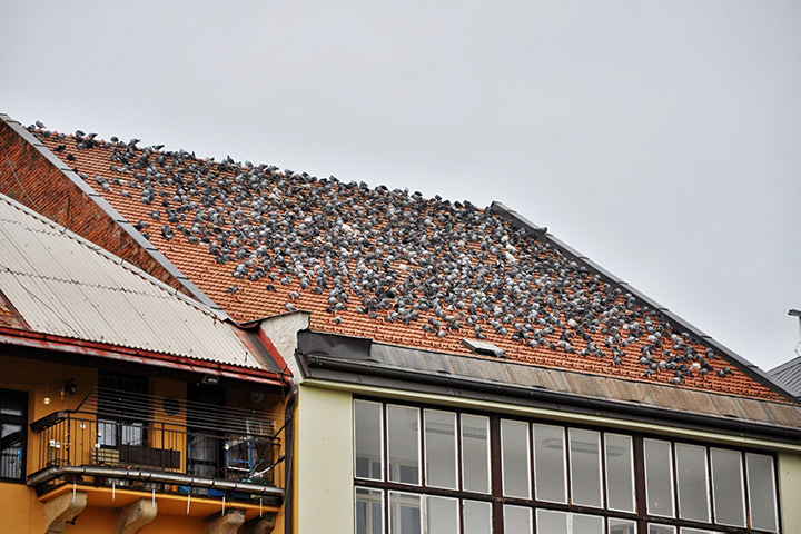 A2B Pest Control are able to install spikes to deter birds from roofs in Kingsbury.