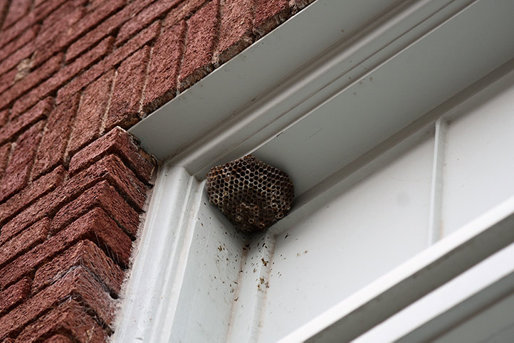 We provide a wasp nest removal service for domestic and commercial properties in Kingsbury.